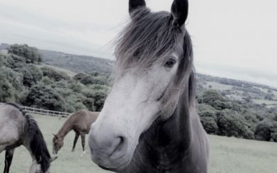 Equine Assisted Therapy ~ Horse Spirit Medicine